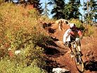 Diamondback DF5 Riders Shred Stevens Pass