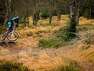 Keilder XC trails
